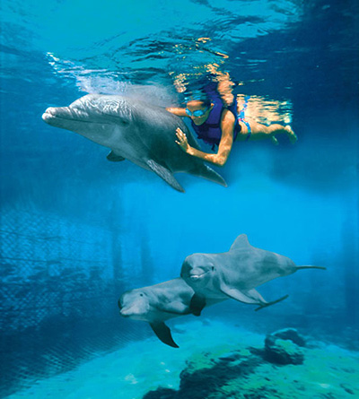 Couples Swim with the Dolphins